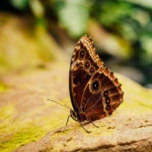 Естественная природа